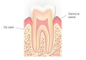 Schéma de molaire